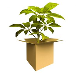 Importing plants and plant products into the U.S. is fairly common.