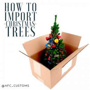 import christmas trees feature image